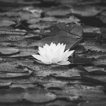 Šta je hinduizam?